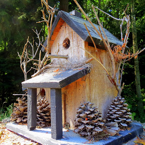Austin's Birdhouse by Bill Foreman - Artistic Objects Other Objects ( bird, house )