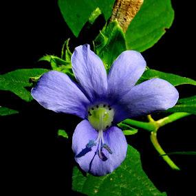 by Rajashri Joshi - Uncategorized All Uncategorized ( wild, purple, green )