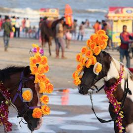 by NAYAN  SARKAR - Animals Horses
