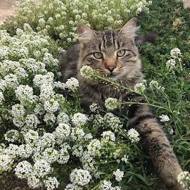 Edi by Tatjana Petric - Animals - Cats Portraits ( cat, play, hairear, cute, flowers )
