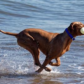 I Got It Ma by Raphael RaCcoon - Animals - Dogs Running ( dog playing, dog )