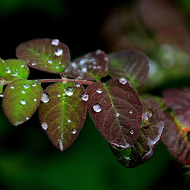 by Sandra Collett - Nature Up Close Natural Waterdrops