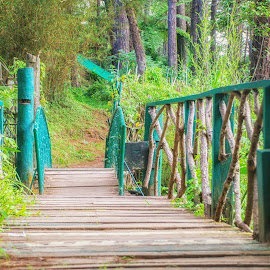 A Little Bridge in the Park by Rio Cobcobo - City,  Street & Park  City Parks ( wooden, trail, bridge, city park, woods, small bridge )