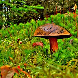 by Gary Latone - Nature Up Close Mushrooms & Fungi