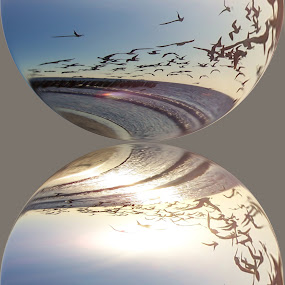 Mirrored Reflection by Colleen Legree - Illustration Abstract & Patterns ( abstract, reflection, illustration, beach, birds )