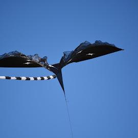 black bird kite by Rachel Rachel - Artistic Objects Other Objects ( flying, sky, kite, black,  )