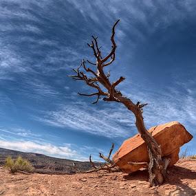 by Gosha L - Nature Up Close Trees & Bushes (  )