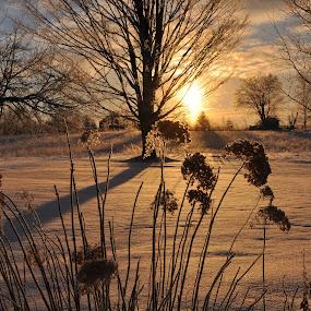 Sunrise  by Debbie Johnson MacArthur - Landscapes Sunsets & Sunrises