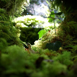 Closeup forest by Erwan Baron - Nature Up Close Other plants