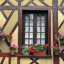 Window by Dobrin Anca - Buildings & Architecture Architectural Detail ( contrast, window, street, flowers, normandy )