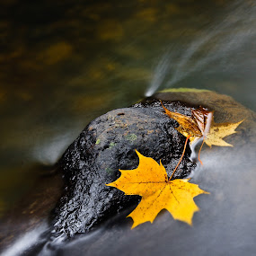 place for two by Eriks Zilbalodis - Nature Up Close Leaves & Grasses ( fall leaves on ground, fall leaves, longexposition, autumn, stone, grey, yellow, leaves )