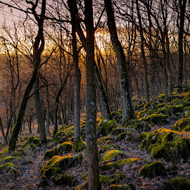 Magic Forest by Nagy Levi - Landscapes Mountains & Hills ( lights, winter, color, sunset, moss, sundown, trees, forest, landscape, sun )