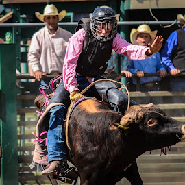 Hang On by Jim Shafer - Sports & Fitness Rodeo/Bull Riding ( jim berryman-shafer, students, cowboys, high school rodeo, rodeo, western images, nv )