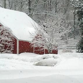 by Sandy Hogan - Uncategorized All Uncategorized ( winter, red barn, barn )