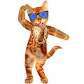 Dancing Talking Cat APK for Bluestacks