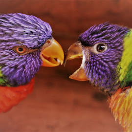 by Anja Kroes - Animals Birds
