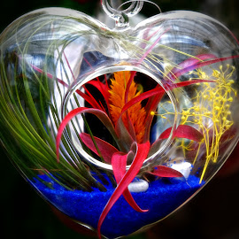 Heart Shaped by Mill Tal - Artistic Objects Glass