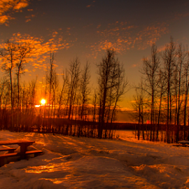Elk Island Park by Joseph Law - City,  Street & Park  City Parks ( clouds, winter, alberta, snow, morning glory, trees, elk island, sunshine )