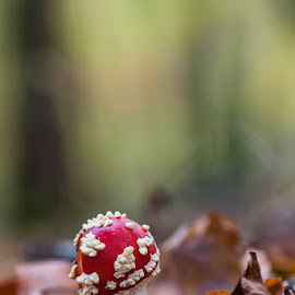 by Denis Keith - Nature Up Close Mushrooms & Fungi