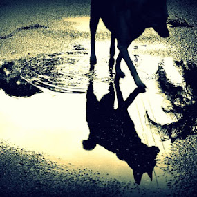 Tike's Reflection by Lizz Condon - Animals - Dogs Playing ( reflection, puddle, dog )