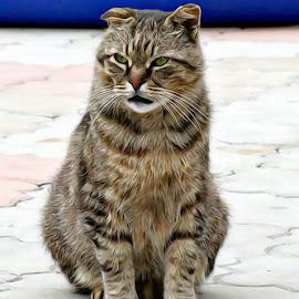 Bad by Irina Aspinall - Digital Art Animals ( cat, tiger cat, bad cat, angry )