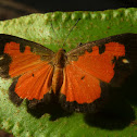 Buttrfly