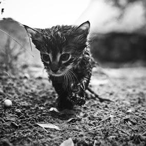 by Artur Jakutsevich - Animals - Cats Portraits