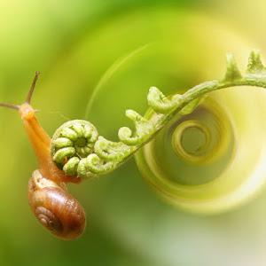 Green Labirin_385.JPG