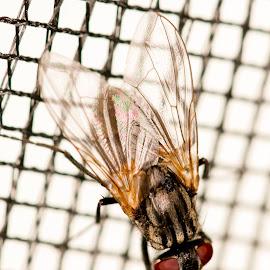Fly by Mona Tertnes-Bakke - Animals Other