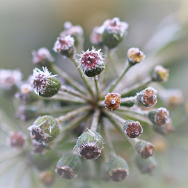 by Arjo van Timmeren - Nature Up Close Other plants