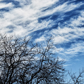 Just a window view by Michael Krivoshey - Landscapes Cloud Formations ( clear, clouds, sky, tree, blue )