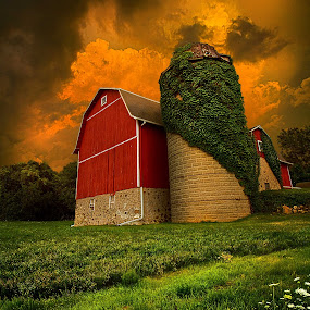 Sentient by Phil Koch - Landscapes Prairies, Meadows & Fields ( summer. spring, wisconsin, vertical, natural light, photograph, environement, farmland, yellow, phil koch, leaves, spring, sun, photography, farm, love, barn, nature, autumn, horizons, flowers, inspired, clouds, office, orange, green, twilight, agriculture, horizon, myhorizonart, scenic, morning, portrait, field, winter, red, seasons, blue, national geographic, sunset, serene, peace, fall, meadow, earth, sunrise, landscapes, floral, inspirational, , country, rustic, rural, old, backroads, silo, crops, family )