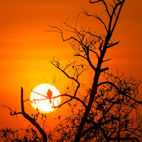 dry twigs by Rusman Budi Prasetyo - Landscapes Sunsets & Sunrises ( bird, wildlife, siluet, sunrise, landscape,  )