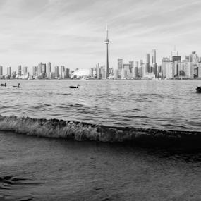 Landscape in Toronto by Fabrizio Contadini - Black & White Landscapes ( water, skyline, nature, canada, park, autumn, toronto, white, lake, landscape, black )
