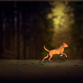 Dog in the forest light by Malcolm Hare - Animals - Dogs Running (  )
