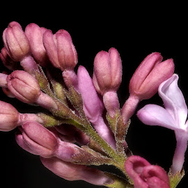 by David Branson - Flowers Flower Buds