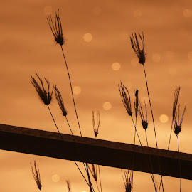 Sparkle by Praveen Kulshreshtha - Nature Up Close Other Natural Objects