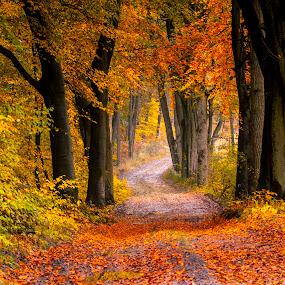 Autumn by Stanley P. - City,  Street & Park  City Parks ( autumn,  )