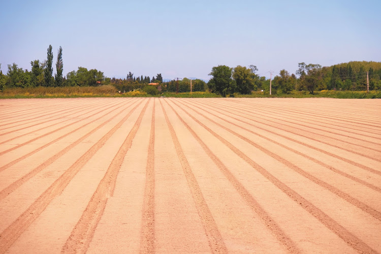 Preparation of a field for planting lavender