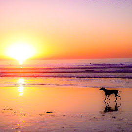 Unleashed by Brendan Mcmenamy - Novices Only Landscapes ( shadow, sunset, beach, dog, la jolla )