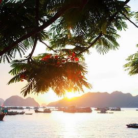 sunshine under the tree by Ngọc Phạm - Landscapes Beaches ( #sunset #catba #vietnam #2015 #trip #island )