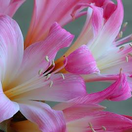 by Susan Marshall - Flowers Flower Arangements