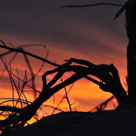 Contrast by Savannah Eubanks - Nature Up Close Trees & Bushes ( sunset, branch,  )