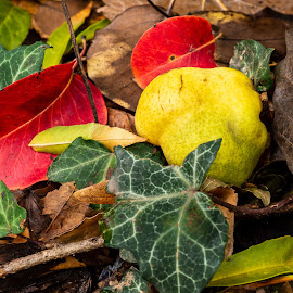 The Fall. by Bogdan Rusu - Nature Up Close Other Natural Objects ( pear, leaves, color, mood, autumn )