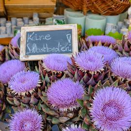 Artichokes in bloom by Missy Outen - Food & Drink Fruits & Vegetables ( market, bloom, germany, artichoke, flower )