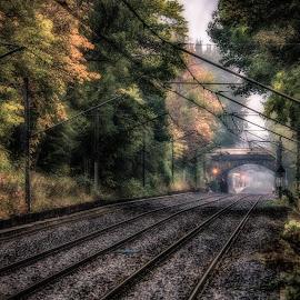Ilford Road Metro  by Adam Lang - Transportation Railway Tracks ( train tracks, metro, rail, trees, newcastle, ilford road, underground )