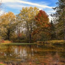Bonnie Park Pond by Millieanne T - City,  Street & Park  City Parks