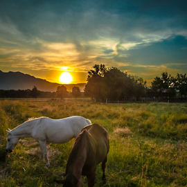 Horses sunset by Jesus Giraldo - Animals Horses ( clouds, animals, horses, hdr, grass, heaven, colors, nice, beauty, paradise, sun, mountains, nature, sunset, peace, trees, inspirational,  )