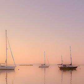 Sunrise at Havre de Grace by Mike Parker - Transportation Boats ( water, chesapeake, sunrise, sailboat, boat )