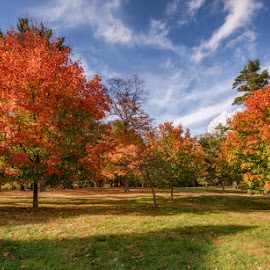Flaming Arrows by Linda Karlin - Landscapes Prairies, Meadows & Fields ( autumn, trees, landscape )